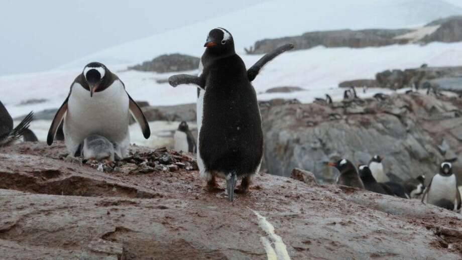 There's something funny about penguin guano in Antarctica. Photo: Sophie Elise Elberling