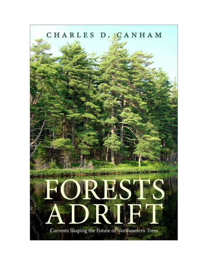 Minor Memorial Library in Roxbury will present a Zoom presentation on northeastern forests May 27. Photo: Courtesy Of Minor Memorial Library / Danbury News Times