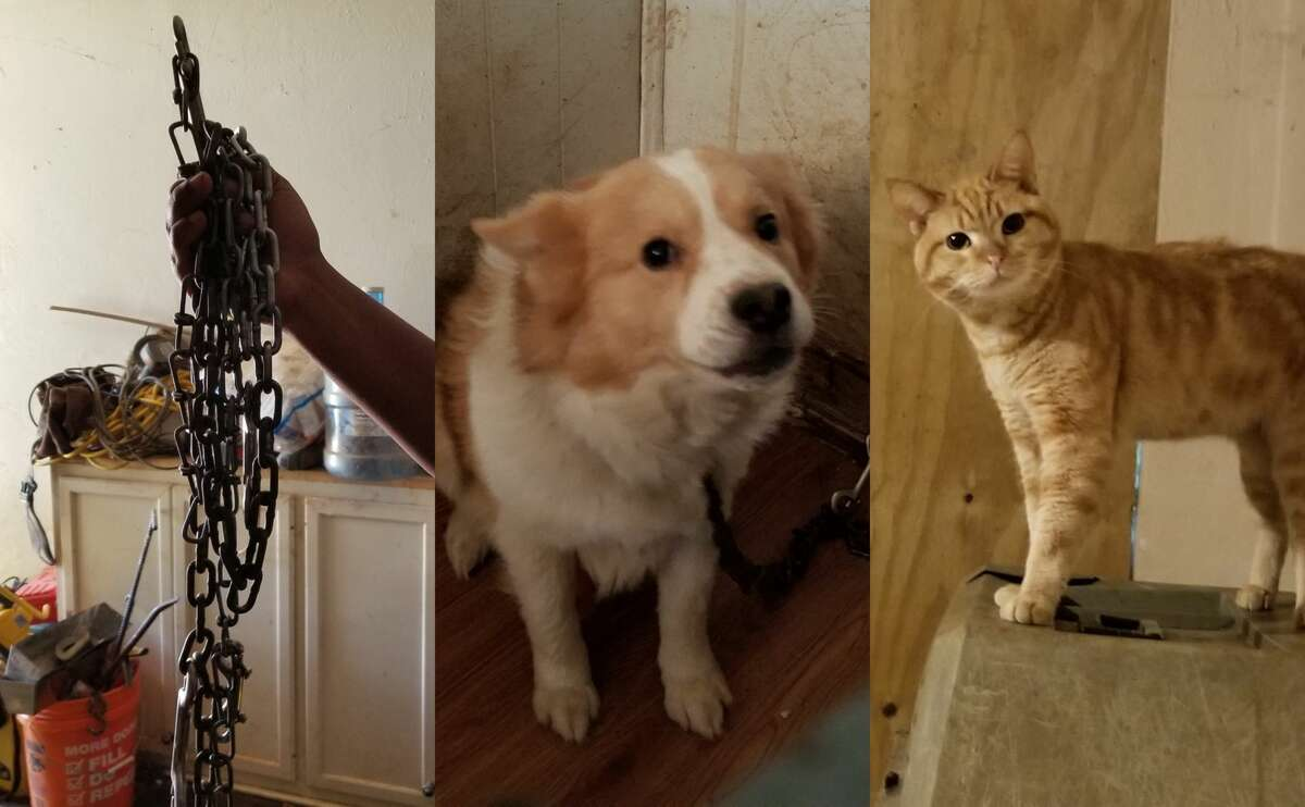 A total of 27 animals, some found chained to walls, were seized on Tuesday from a dilapidated home in the MacGregor Park neighborhood.