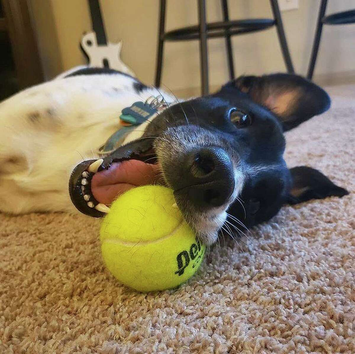 """""""Moxie is a 3 year old terrier mix that we rescued from Corpus!"""""""