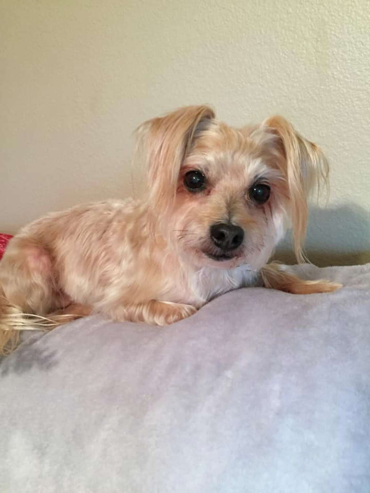 """""""Sunny - he's 16 and our first 'failed' rescue (yes -- we adopted him)."""""""