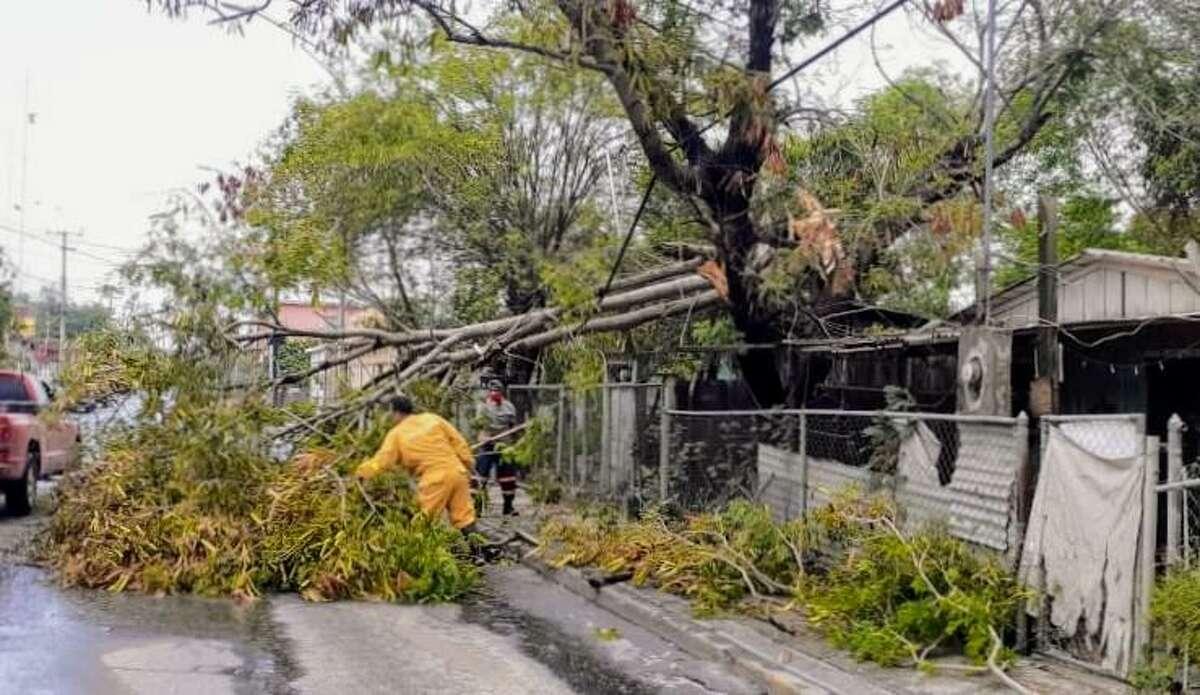 Personal de Protección Civil y Bomberos de Nuevo Laredo, México, participan en la remoción de un árbol que cayó por la tormenta que impactó el área el jueves por la madrugada.