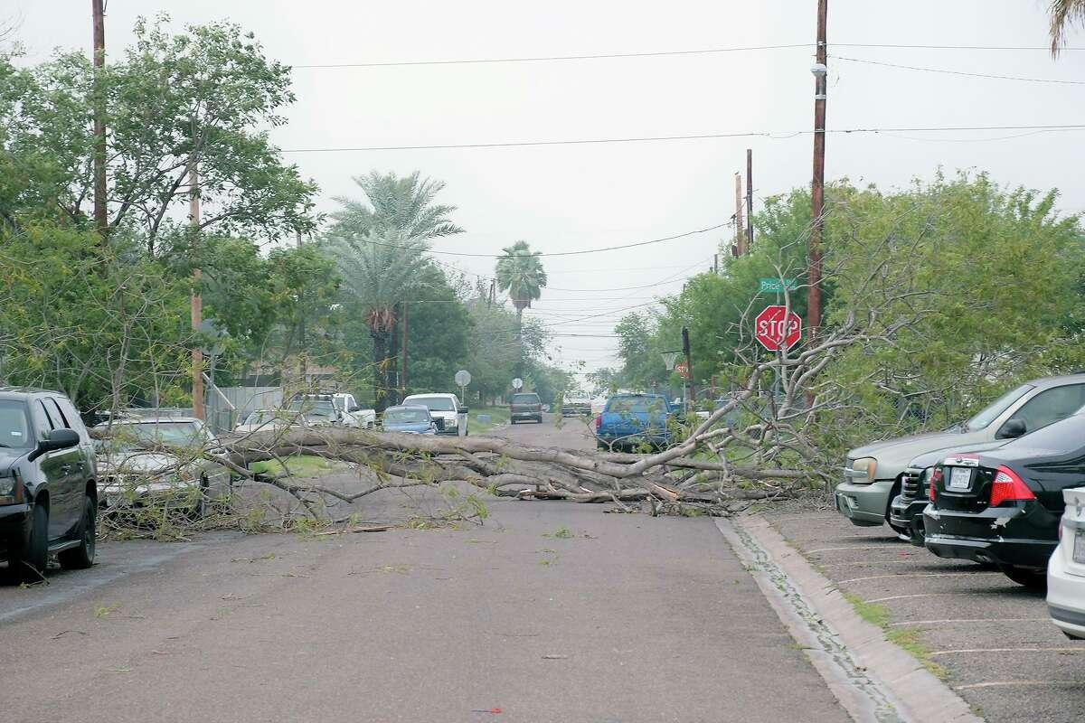 Este árbol cayó en la cuadra 2600 de la avenida Tapeyste en el este de Laredo, debido a los fuertes vientos del jueves 21 de mayo de 2020, causados por una tormenta que impacto el área.