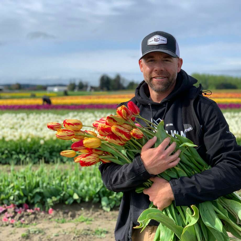 Andrew Miller collects tulips across Tulip Town. Photo: Courtesy Tulip Town