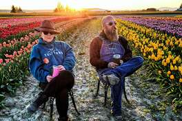 The Tulip Town team enjoys their tulip fields.