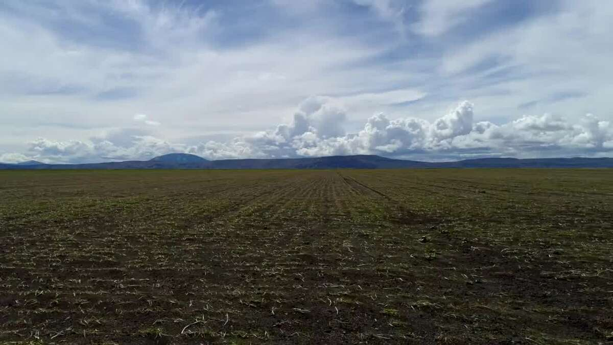 A field near the Klamath River.