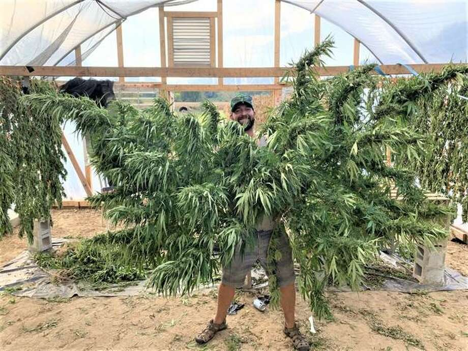 Nathaniel Kamp displays freshly harvested hemp plants earlier this fall in his first season of growing the plants in Calhoun County last year. Because of flooding, at times he and his wife, Jacqi Beachler, needed a boat to reach their crop.
