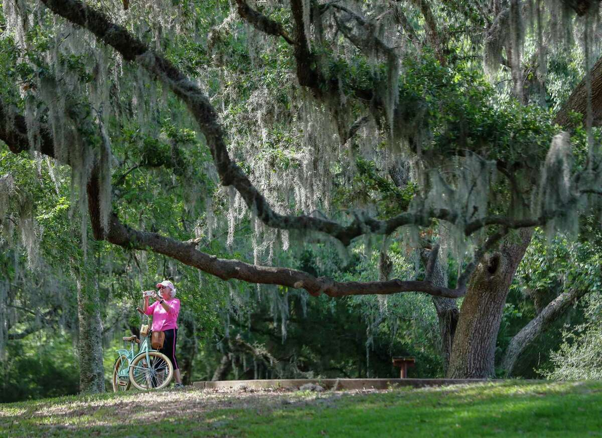 A woman takes photos under trees with Spanish moss near 40 Acre Lake at Brazos Bend State Park, in Needville, Saturday, May 23, 2020. After two months in lockdown, parks are starting to open up during Memorial Day weekend. To book a weekend spot at Brazos Bend State Park, which is now limited to 40 percent capacity, the park superintendent reserving a day pass two to three weeks in advance. Other parks are sold out for the season.