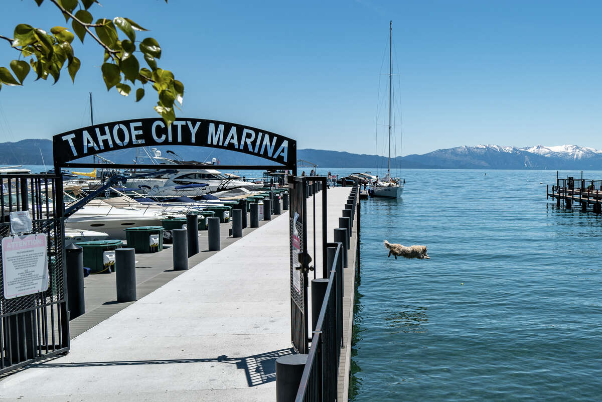 Farley, a 3-year-old golden retriever, sends one off the dock at the Tahoe City Marina in May 2020.