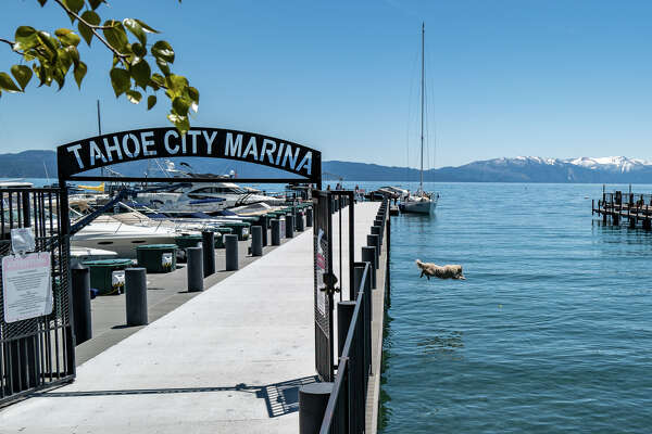 Farley, a 3-year-old golden retriever, sends one off the dock at the Tahoe City Marina.