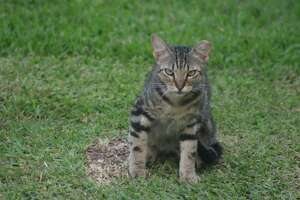 An unhappy feral cat sulks at Bay Area Park.