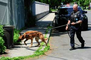 Officer Logan Pavia and his K-9 partner Pyro along with Stamford Police officers continue their search in and around the area surrounding the Fairfield Avenue overpass and I-95 following a reported shooting incident on May 26, 2020. A person of interest was taken by police and EMS to Stamford Hospital for evaluation after being pick up on I-95 northbound attempting to wave down traffic near Fairfield Avenue. The investigation is ongoing.