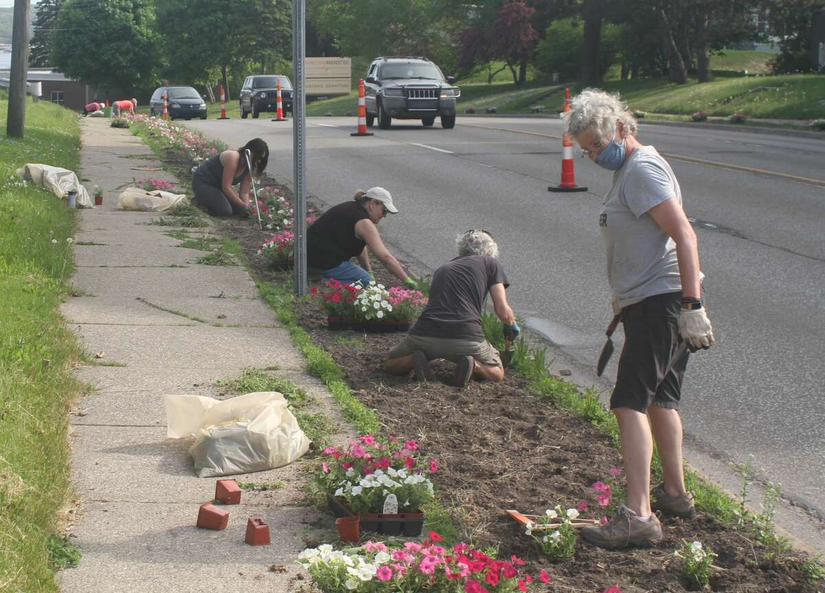 Volunteers plant petunias in Manistee along US-31 for Blossom Boulevard.