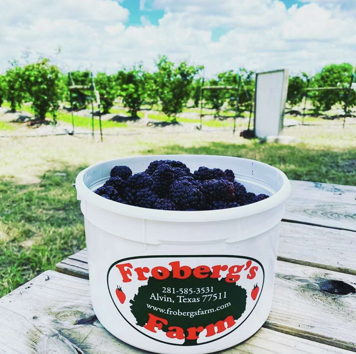 Frobergs Farms is located just outside of Houston in Alvin, Texas.