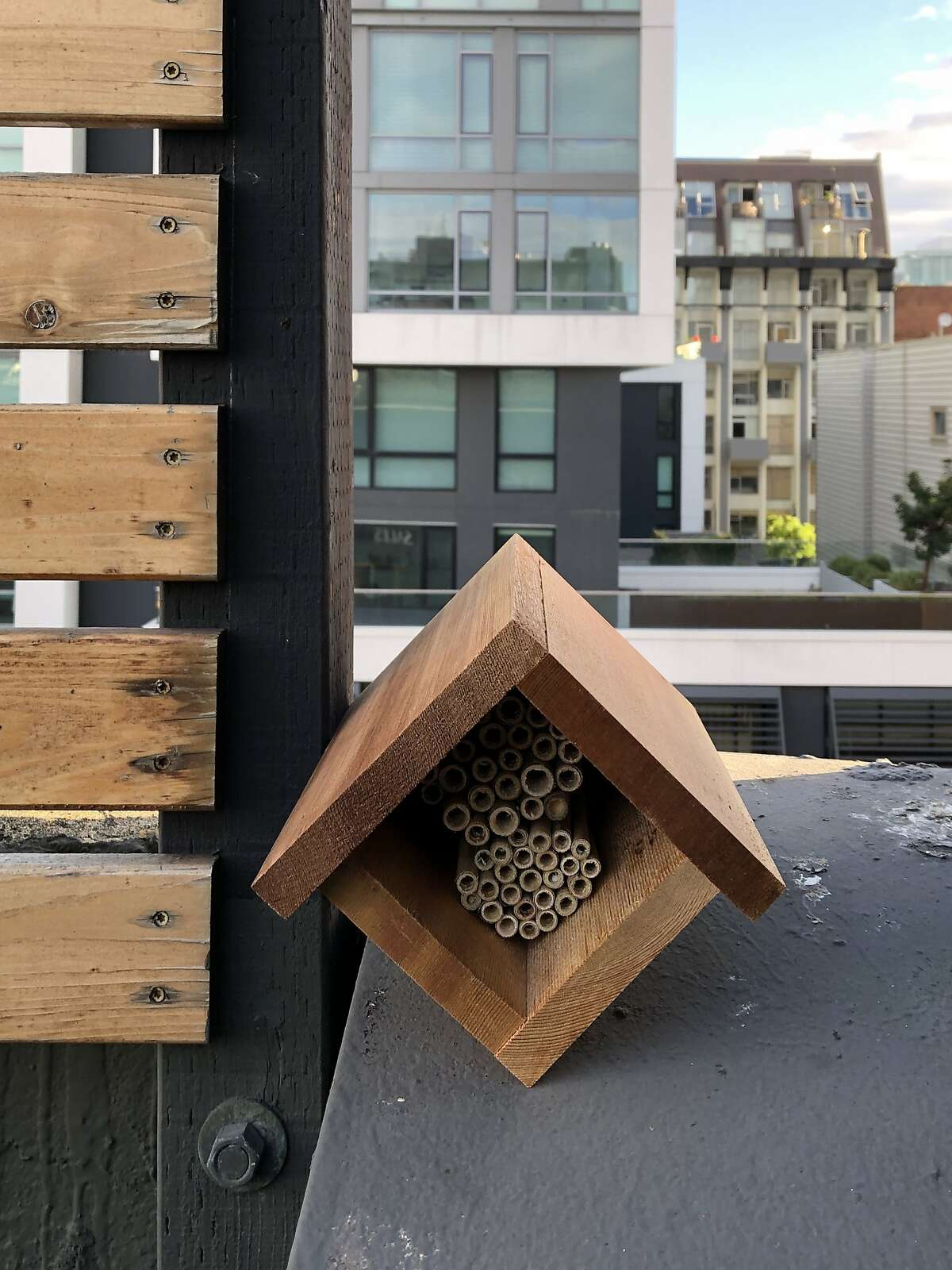 Bee house for Mason bees that San Francisco beekeeper Bianca Dawydiak hopes to install in the Bay Area for her stingless bees.