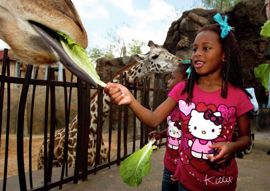 The Houston Zoo reopens on June 3. Photo: Cody Duty, Staff / Houston Chronicle / © 2011 Houston Chronicle