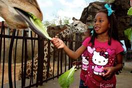 The Houston Zoo reopens on June 3.
