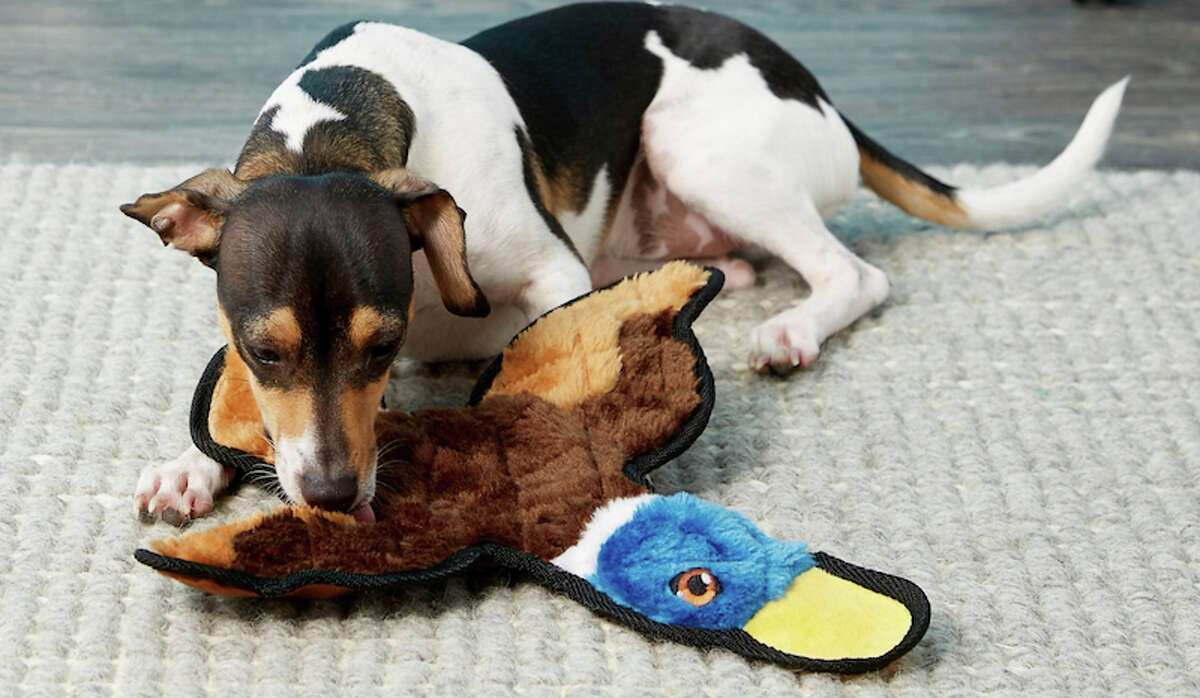 Frisco Flat Plush Squeaking Duck Dog Toy Price: $5.48 Call it hunting instincts kicking in or whatever, but dog love a good squeak. This toy is cheap with a loud quacking squeaker.