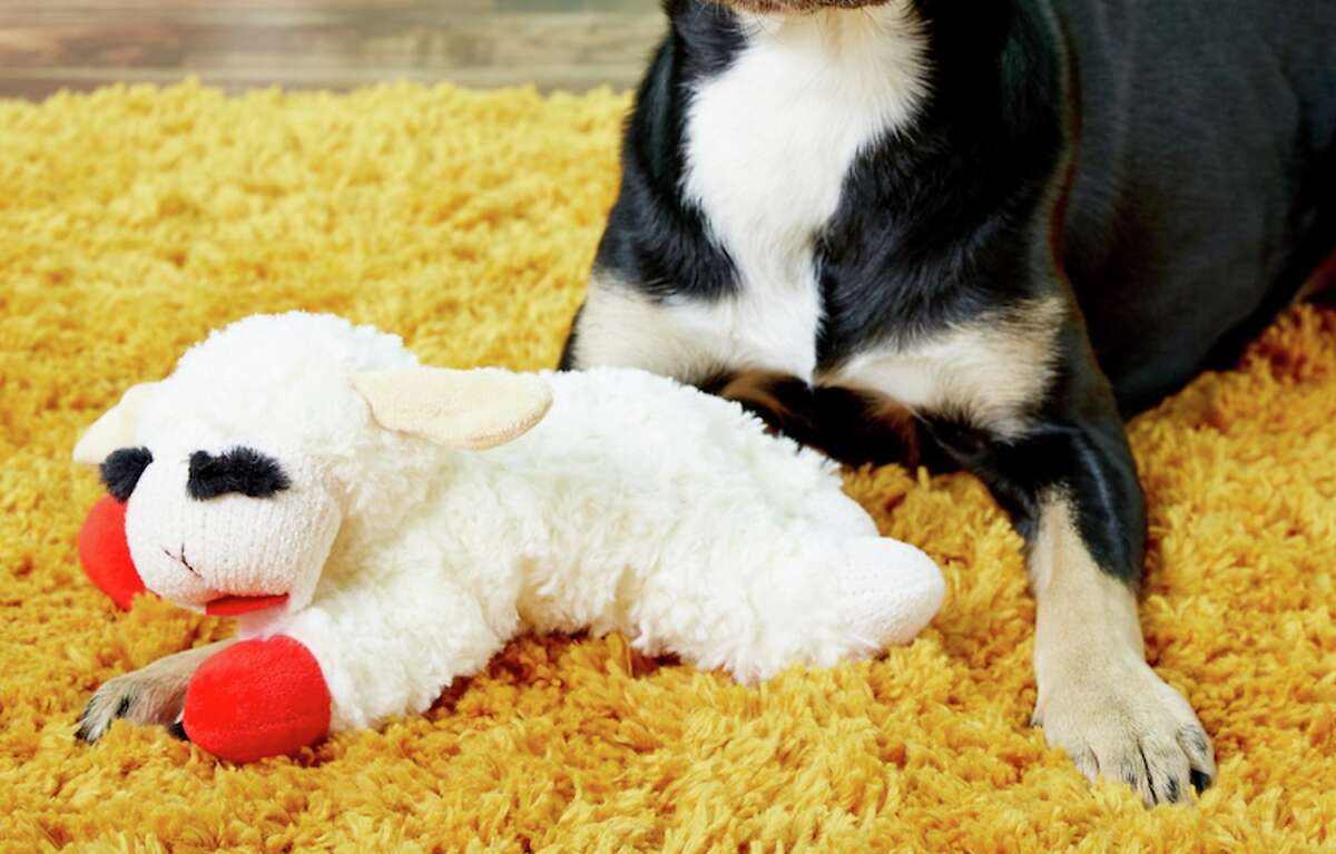 Multipet Lamb Chop Squeaky Plush Dog Toy Price: $5.72 If your dog loves soft toys and won't rip through them in seconds, this Lamb Chop toy will be a cute addition to their toy collection.