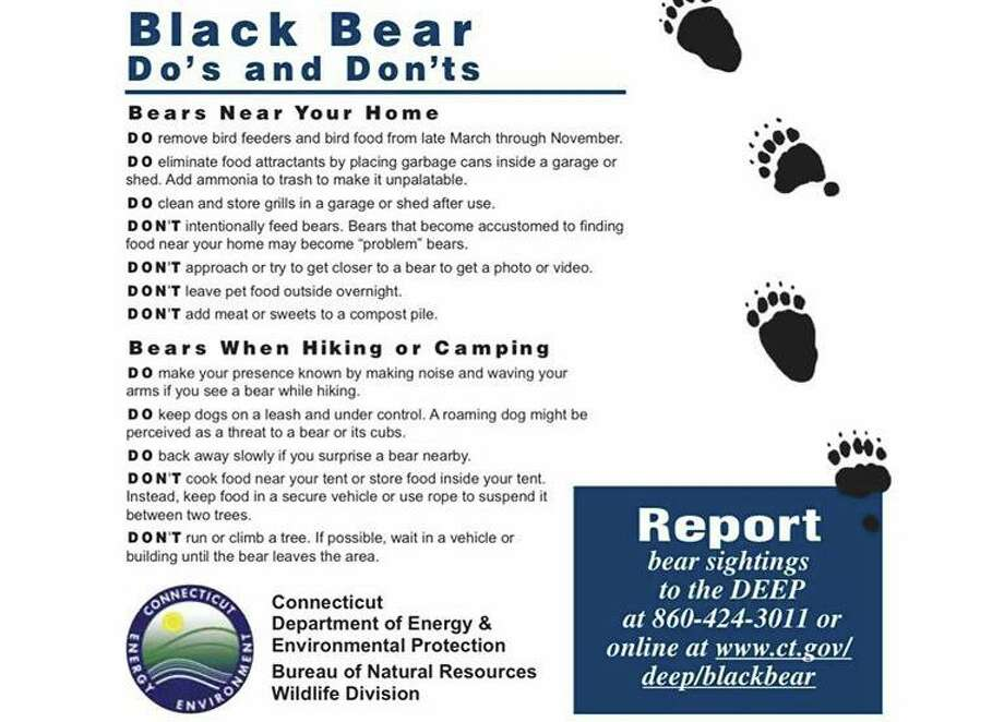 A poster informing the public about bear safety. Photo: Contributed Photo / Department Of Energy And Environmental Protection /