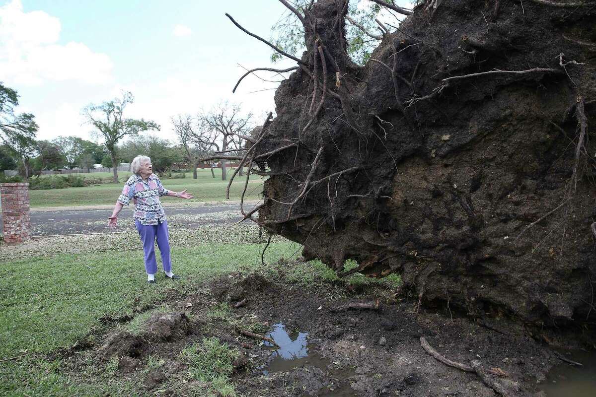 Inge Chambliss expresses her chagrin as she studies the uprooted oak tree in her front yard after storm damage in Kerrville on May 28, 2020. The tree luckily fell way from the 93 year old's hoiuse and out into Crestwood street.