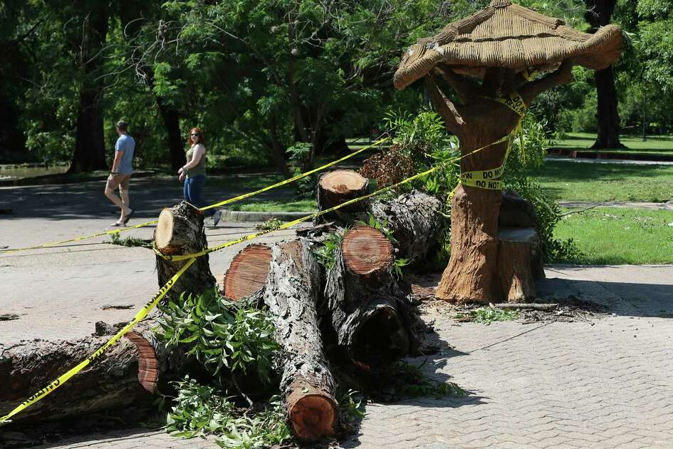 Visitors to Brackenridge Park view a large pecan tree that fell and damaged a section of a historic concrete seating structure on Thursday, May 28, 2020. Work crews for San Antonio Parks and Recreation said they have been busy cutting up downed trees from last night's storm.
