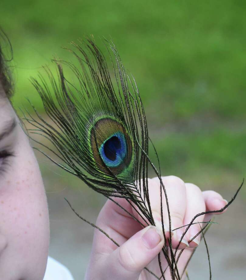 "Harrybrooke Park in New Milford will offer a ""Peacock Strut"" fundraiser June 6-7. Photo: Deborah Rose / Hearst Connecticut Media / The News-Times  / Spectrum"