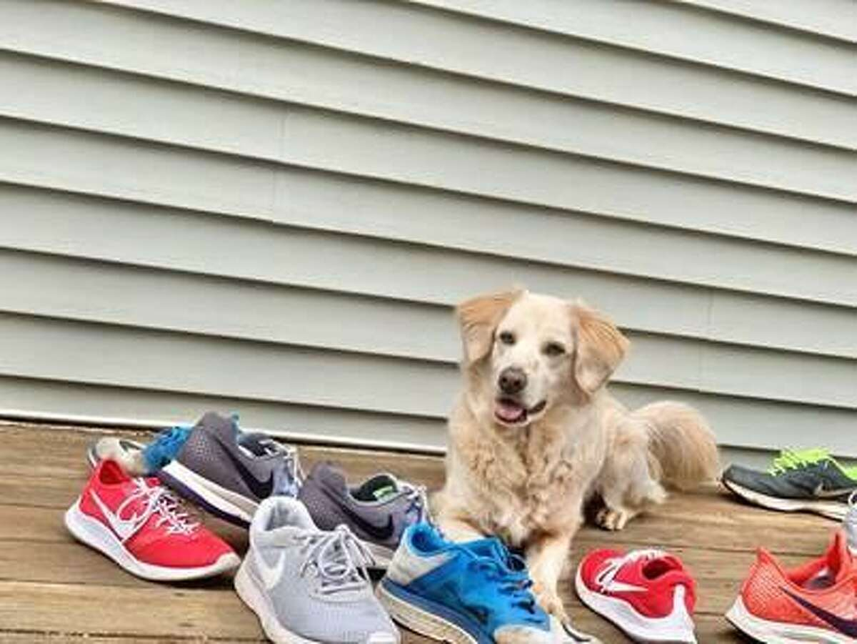 """Want to do something together with friends and family...while you're apart? Register as a team for the """"Pets 2 the Rescue"""" virtual run/walk/bike ride. The$10 entry fee goes to Connecticut Humane Society's pets. During registration, create or join a team. Others who register would then choose """"Join a team"""" and find your team name. Register now and enter your time and distance online. You'll be entered in virtual prize drawings! Start here: cutt.ly/GetOutsideForPets#Pets2TheRescue #ForThePets #CThumane"""