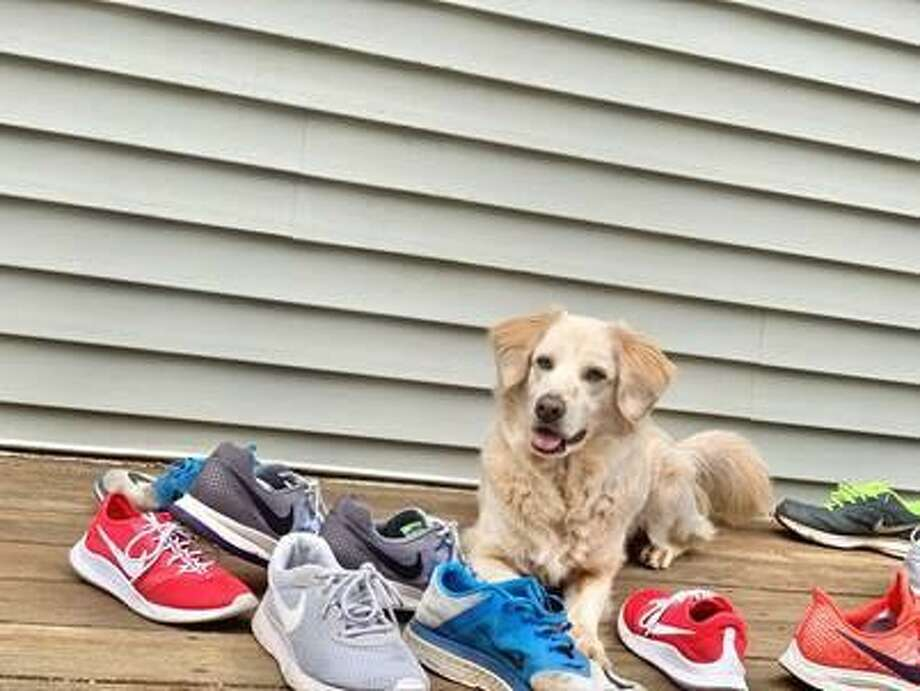 """Want to do something together with friends and family...while you're apart? Register as a team for the """"Pets 2 the Rescue"""" virtual run/walk/bike ride. The$10 entry fee goes to Connecticut Humane Society's pets. During registration, create or join a team. Others who register would then choose """"Join a team"""" and find your team name. Register now and enter your time and distance online. You'll be entered in virtual prize drawings! Start here: cutt.ly/GetOutsideForPets#Pets2TheRescue #ForThePets #CThumane Photo: Contributed Photo"""
