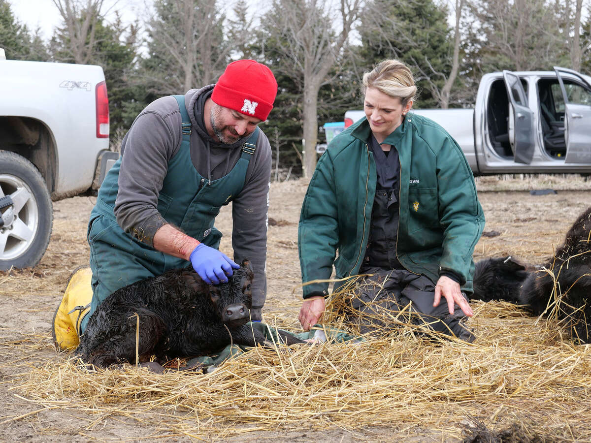 Heartland Docs: Dr. Ben Schroeder and Dr. Erin Schroeder cuddle the newborn calf after a successful cesarean from a terminal mother. (National Geographic/Glass Entertainment Group)