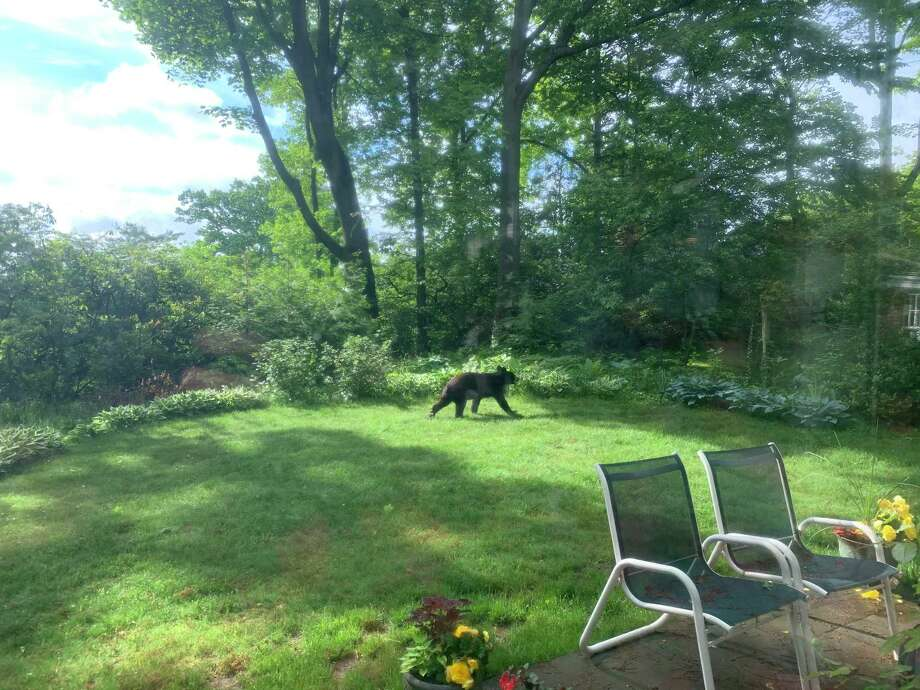 A bear was sighted on Mumford Road in recent days. Photo: Elena Grewal /