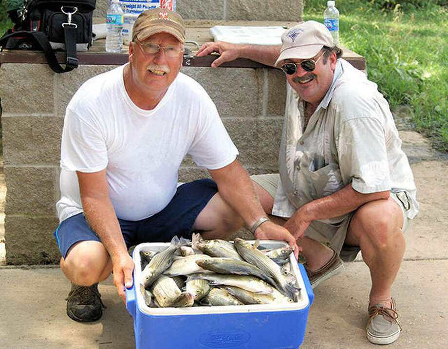 A cooler full of white bass, like this one from Lake Shelbyville, are common catches once the action really heats up for this species. Photo: Curt Hicken / For The Telegraph