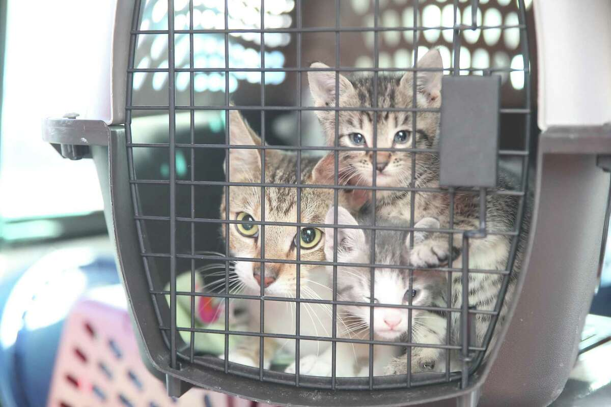 Reports of domestic violence and animal cruelty increased during the COVID-19 stay-at-home order.
