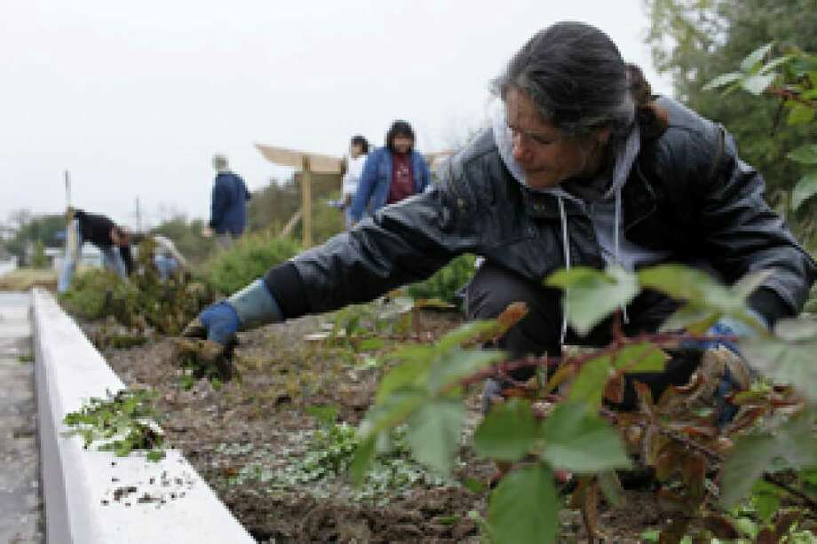 Cosima Colvin pulls weeds at the Beacon Hill Area Neighborhood Association Community Garden in San Antonio on Dec. 12.