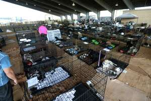 Ford Park's temporary animal shelter in Beaumont. The shelter is taking in animals  displaced from Hurricane Harvey and handing out animal food. Photo taken Saturday, September 02, 2017 Guiseppe Barranco/The Enterprise