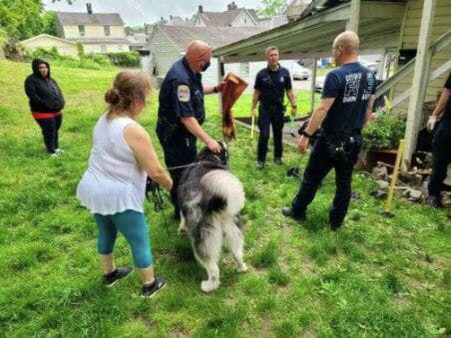Danbury firefighters rescued a dog named Maya after she fell down a hole and got trapped May 28, 2020. Photo: Contributed Photo