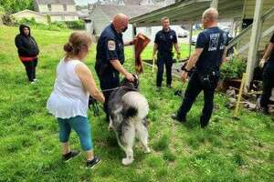 Danbury firefighters rescued a dog named Maya after she fell down a hole and got trapped May 28, 2020.