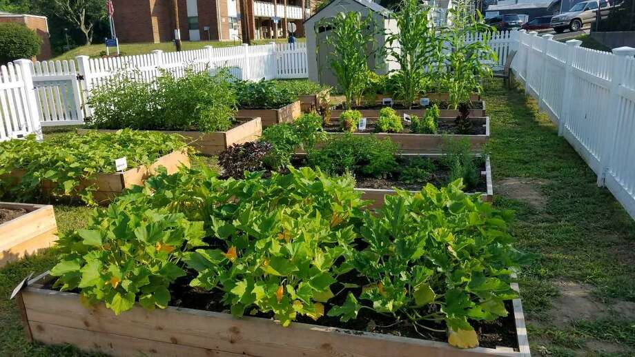 Valley United Way announced last week a new partnership with Massaro Community Farm of Woodbridge in managing the 13 neighborhood gardens of the Grow Your Own program within the five-town region of Lower Naugatuck Valley. Photo: Contributed Photo