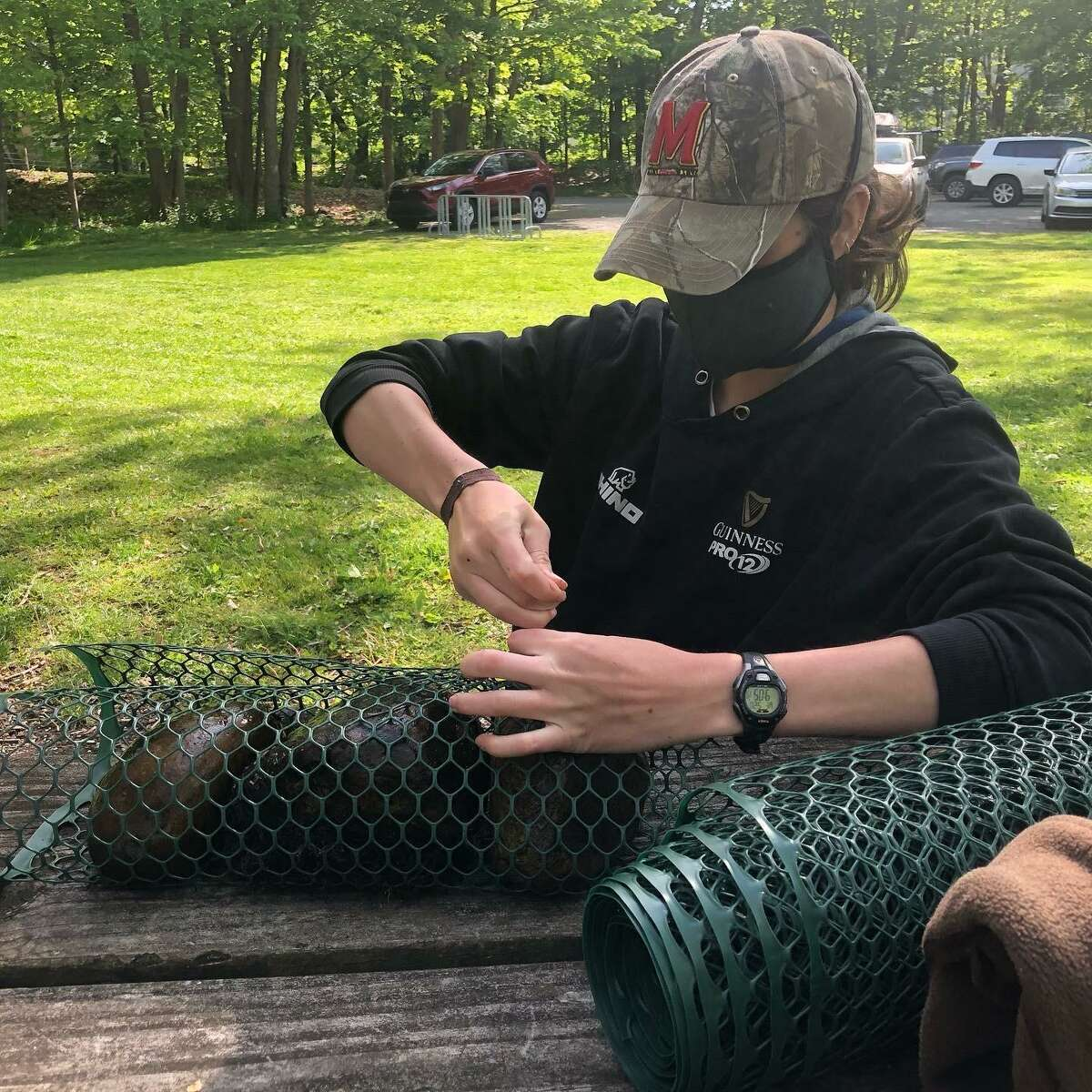 Kelly Nealon, a graduate student at Western Connecticut State University, ties plastic mesh that forms a cage around three rocks - one of which has hornleaf riverweed growing on it. It is hoped the plant will spread from the one rock to the others.