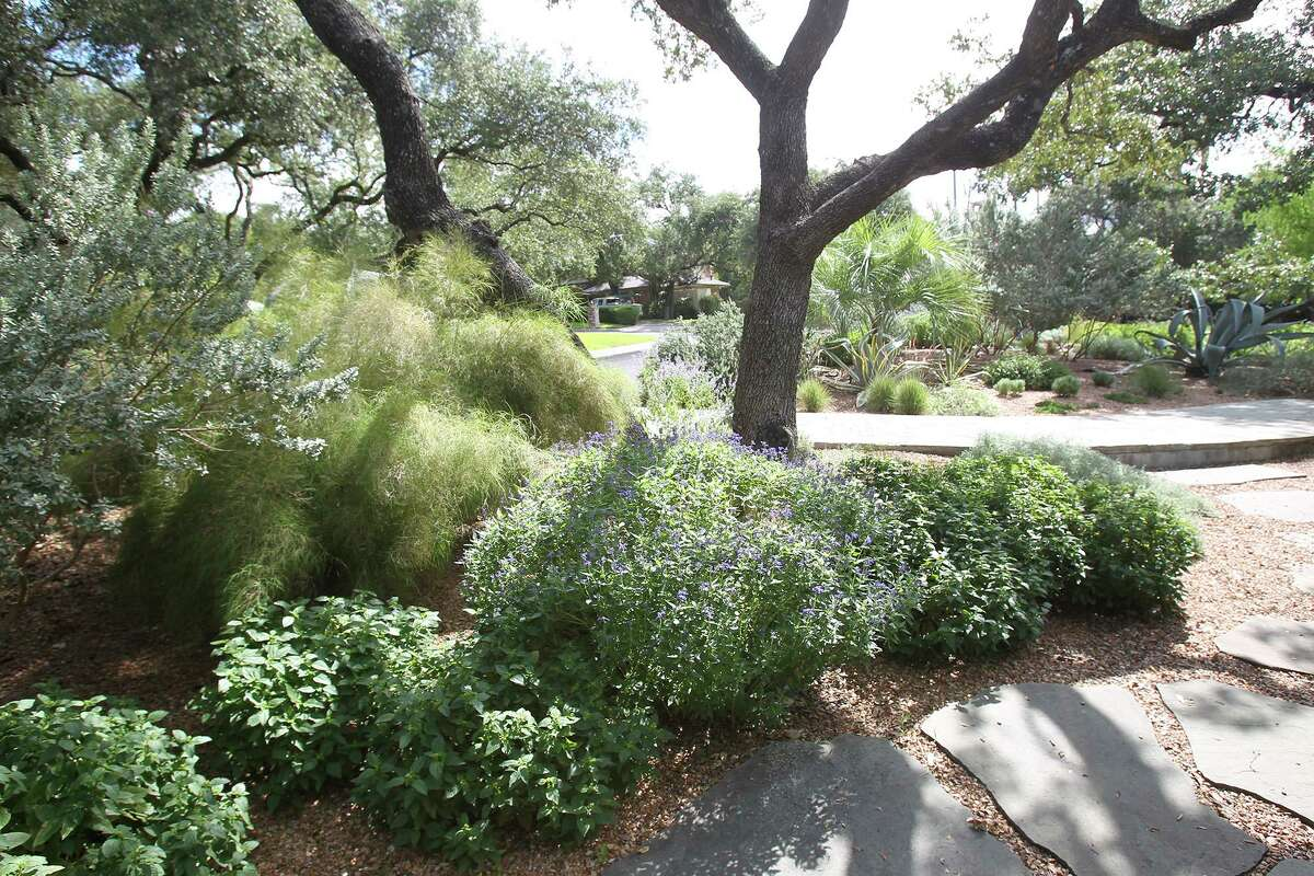 Landscaping featuring water-saving plants.