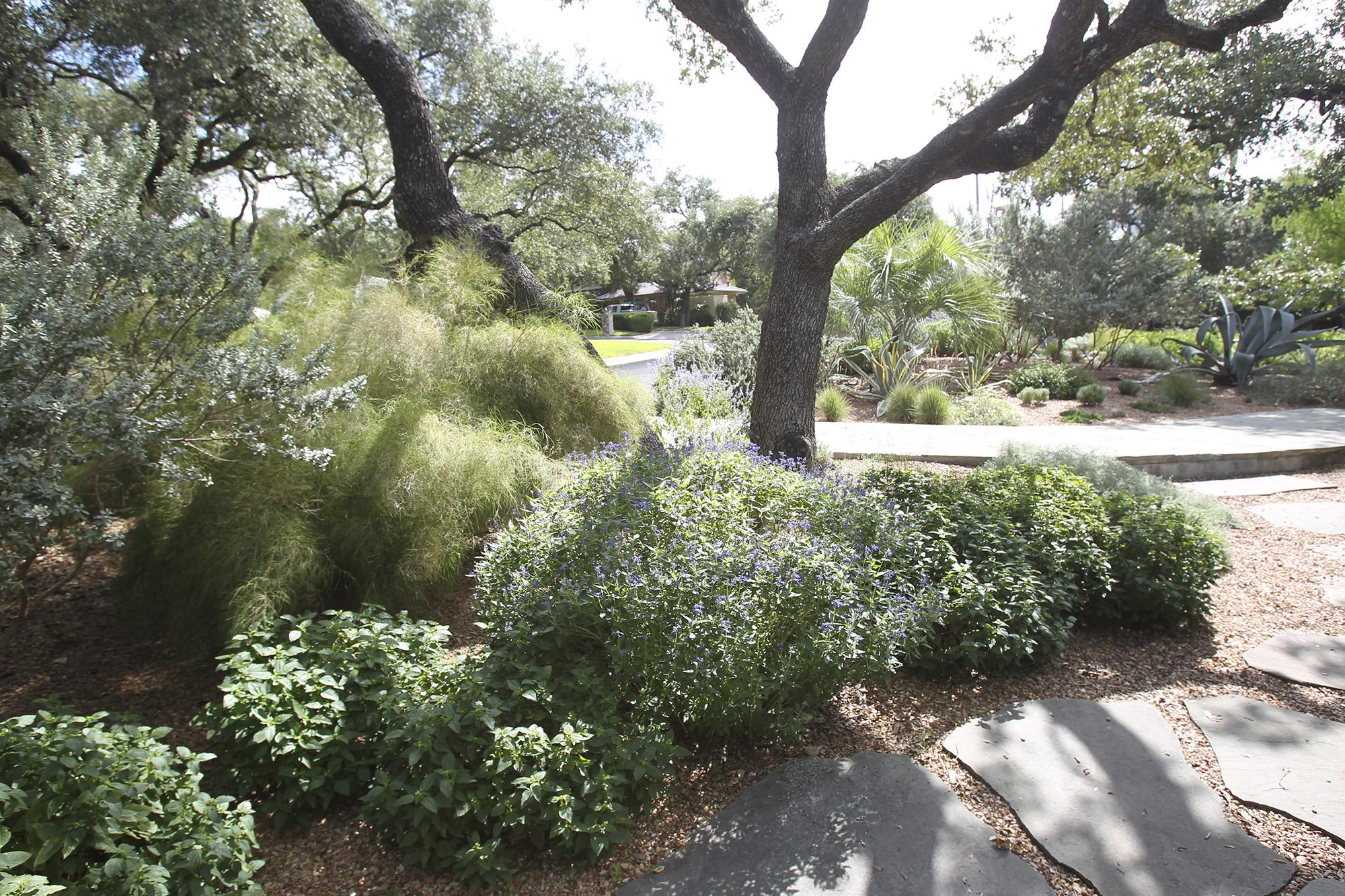 Is Houston Too Wet For Xeriscape Landscaping Not If You Plant Raised Beds