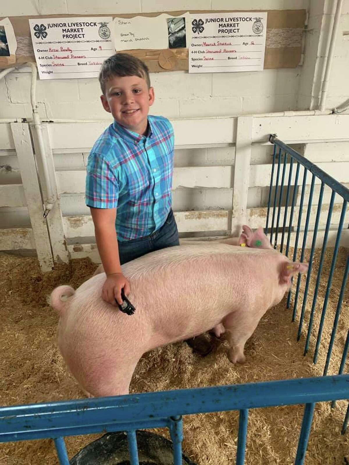Krew Bowlby. 10 years old and shows pigs. Has been with Stanwood Pioneer for 5 years.