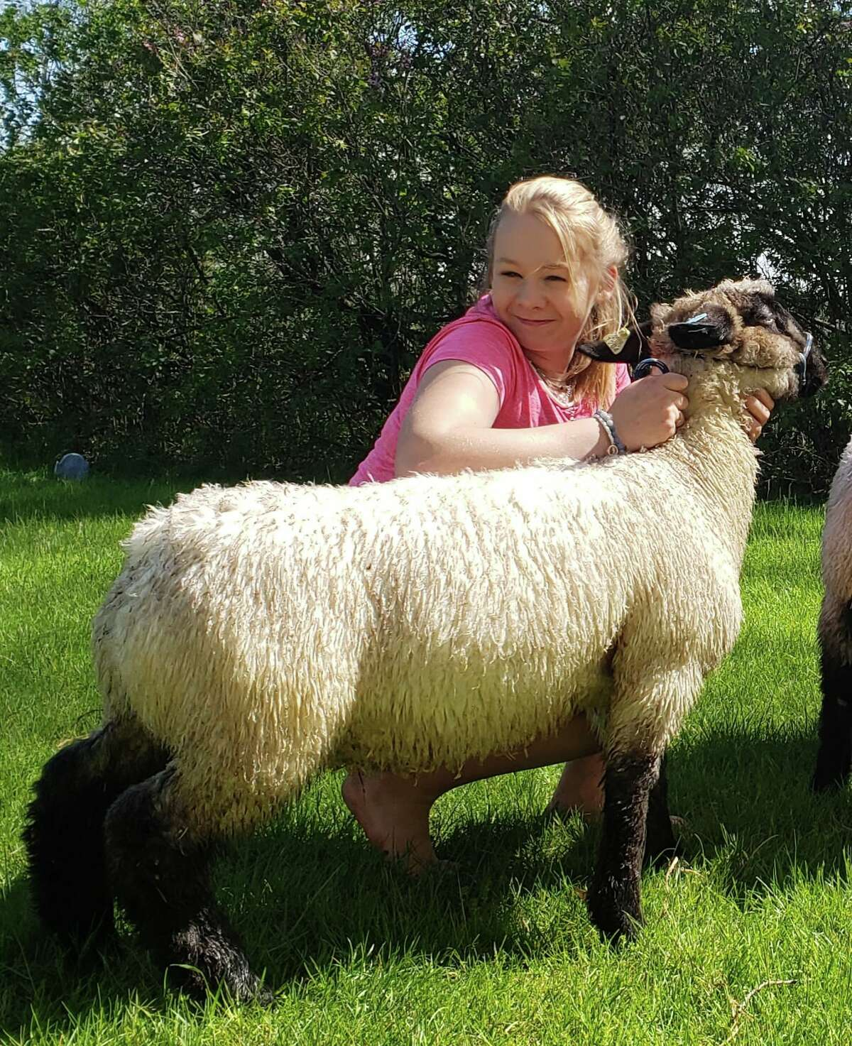 Grace Kwiatkowski shows lambs ,pigs and turkeys She is in Tamarack Town and Country Club.