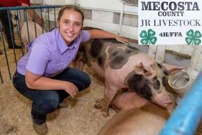 Sadie Metcalf. Shows pigs, and a beef steer. I am in Back Road Country Kids 4H club.