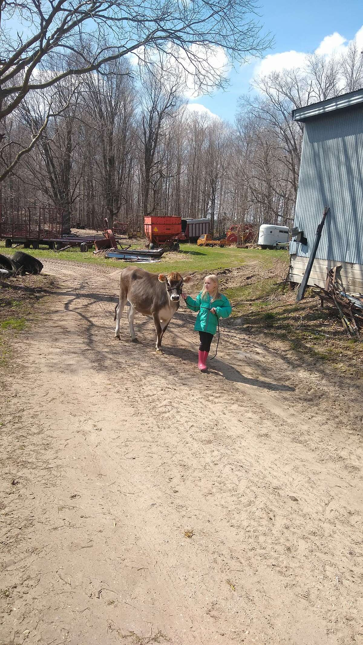 Hayley Eldred is a cloverbud with Back Road Country Kids. This is her and her Jersey heifer.