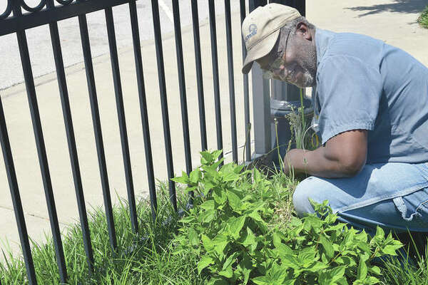 Bill Mayes pulls weeds Tuesday along fencing downtown during his final shift before retirement.