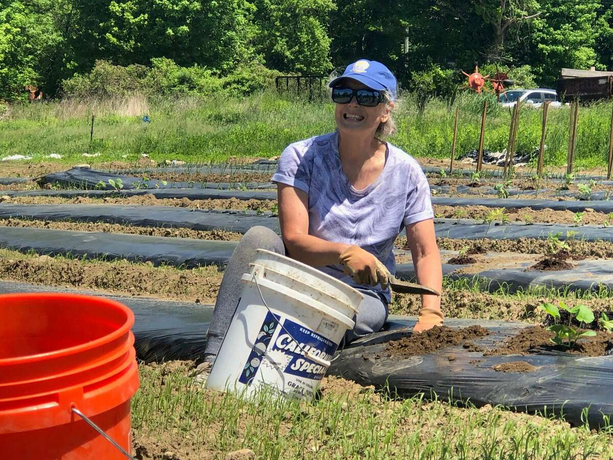 The Garden of Life, a community garden, has sprouted at Deerefield Farm in New Milford. The project is a collaboration between Helping Hands for Heros, the Bridgewater Grange, the farm and numerous volunteers. Above, Peg Zottola of the Bridgewater Grange plants squash plants on a recent work day.