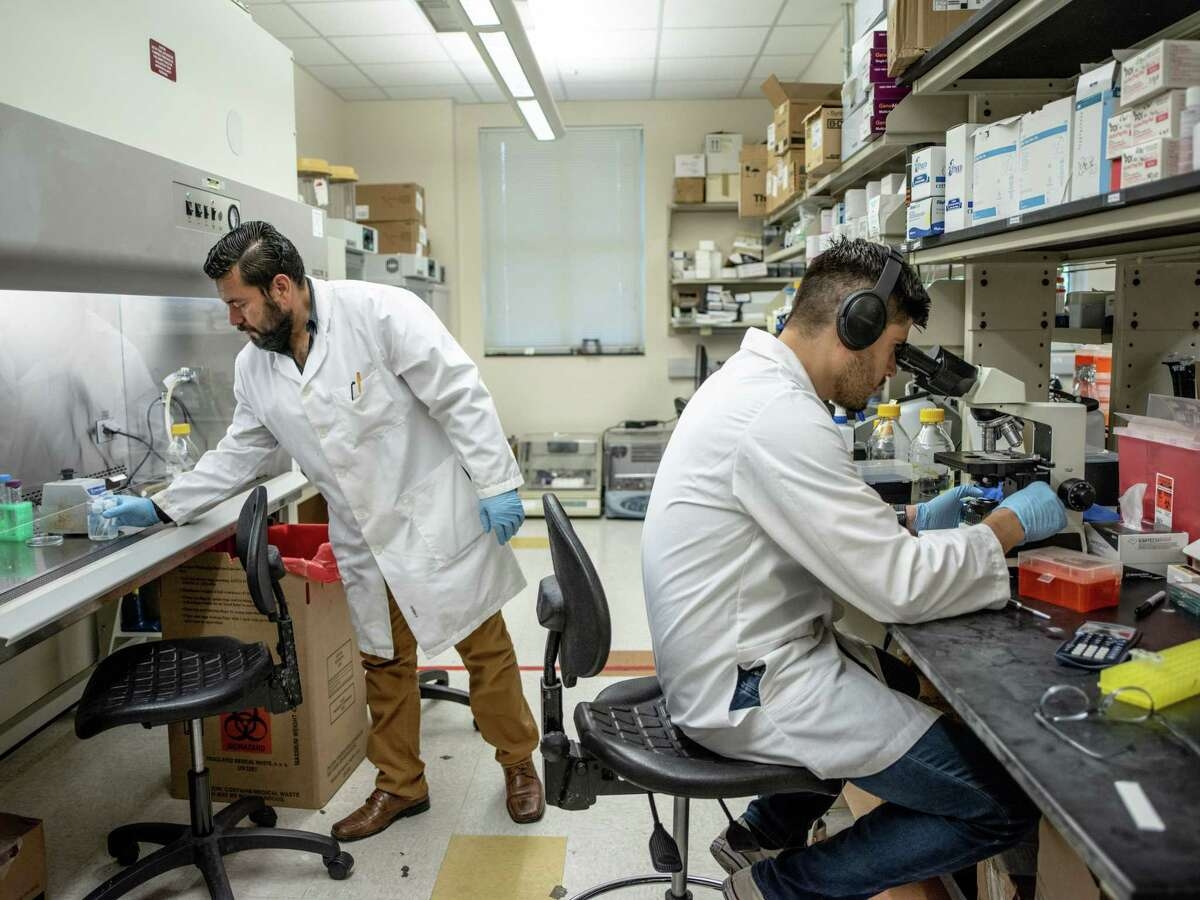 Post-doctoral researchers Roberto Vasquez, left, and Daniel Montelongo, right, work on treatments to combat an emerging pathogen, Candida Auris, in a microbiology lab at UTSA in 2019. Faculty groups are warning that the state's budget cuts could hurt the university's research along with student success.