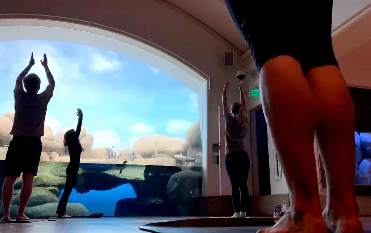 California Academy of Sciences� Curator Vikki McCloskey leads a group in penguin yoga on Monday, June 1, 2020 in San Francisco, Calif.