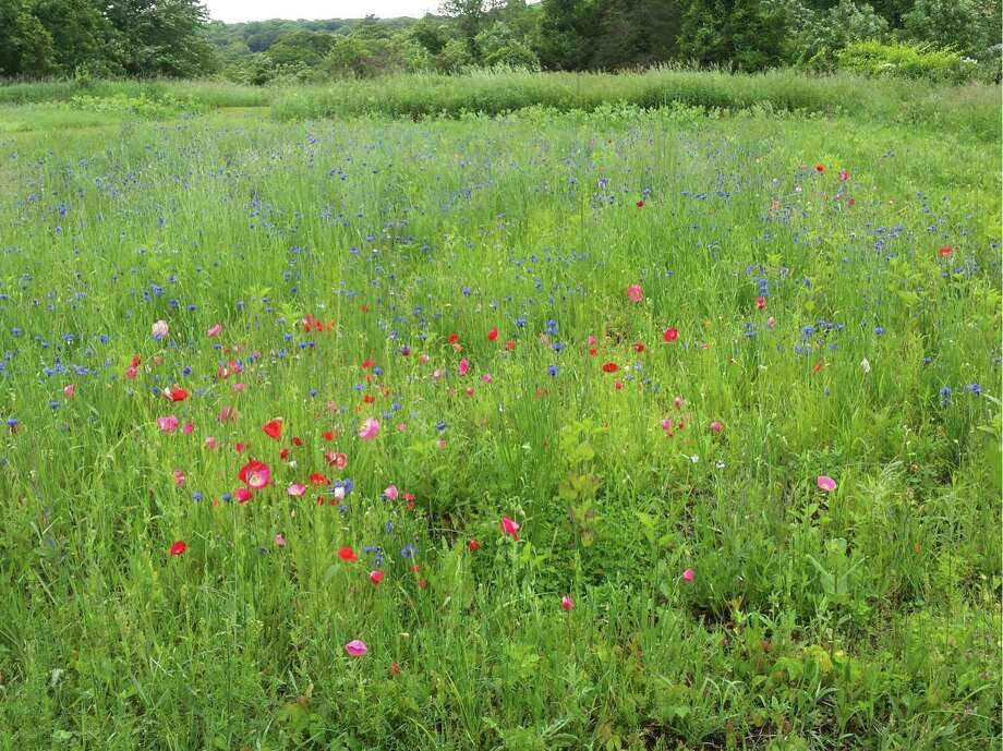 Wildflowers at McKeon Farm. Photo: Contributed Photo